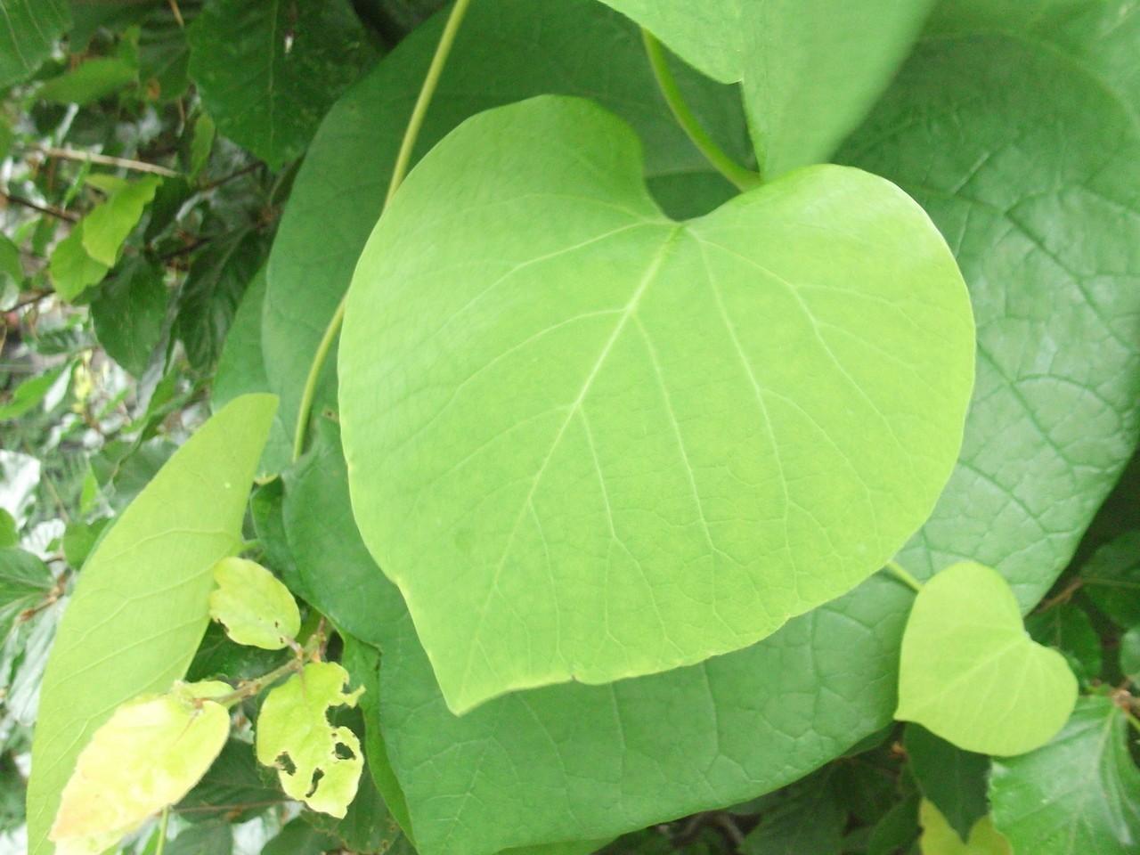 Jak dbać o serce – rady i wskazówki